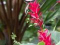 13048148 Motýl
