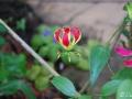 15048833 Motýl květiny