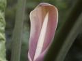 28022009_DSC6324D v botanické