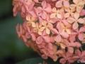 28022009_DSC6369D v botanické