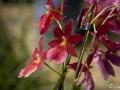 28022009_DSC6434D v botanické