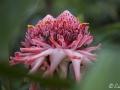 28022009_DSC6467D v botanické