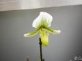 28022009_DSC6495D v botanické