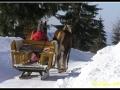 Koňský potah v zimě