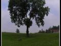 Strom u statku