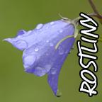 odkaz - ROTLINY